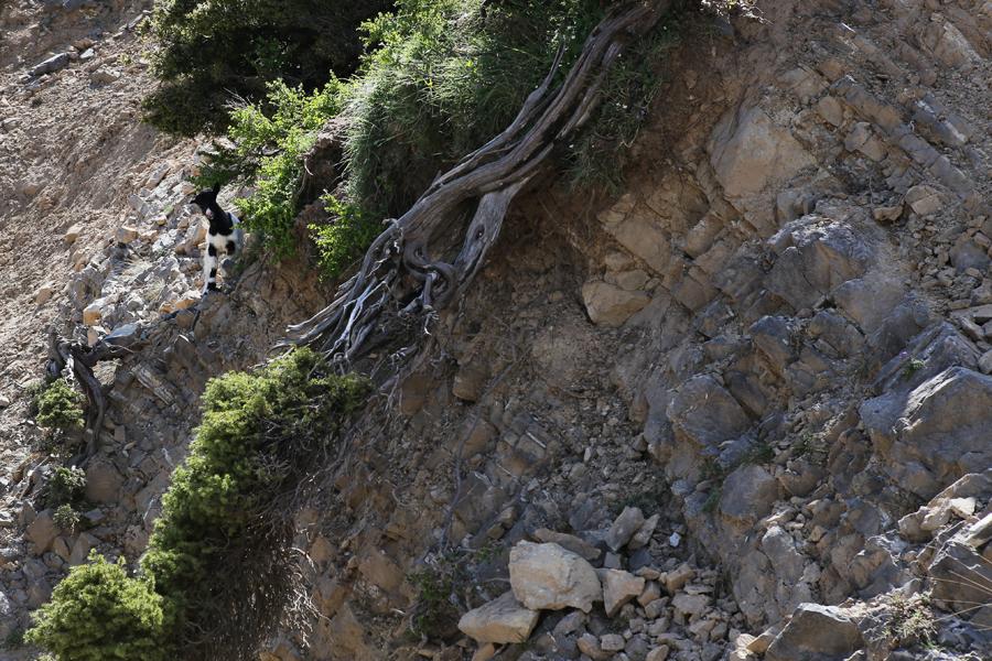 góry kreta lefka ori032
