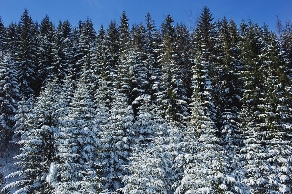 beskidy zima19