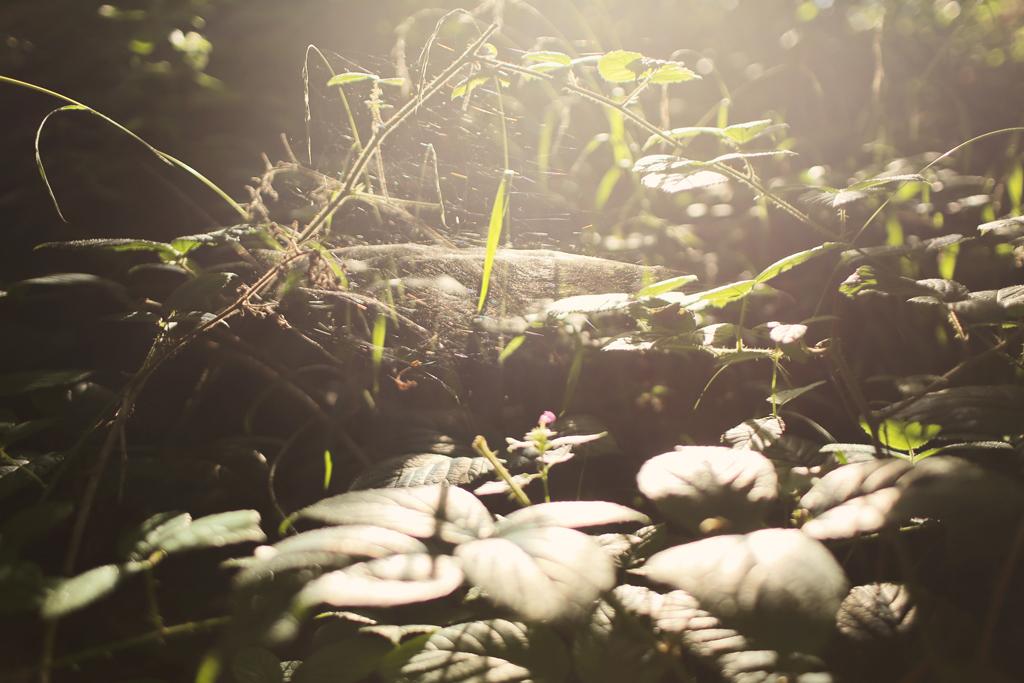 roztocze-gorajec032